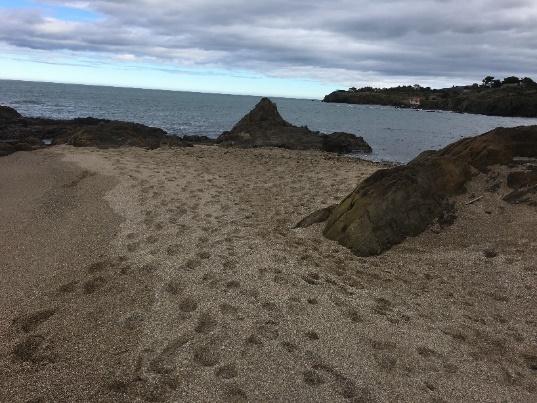 illustration5 article racou hiver 2018 2019 - La plage du Racou au cours de l'hiver 2018-2019